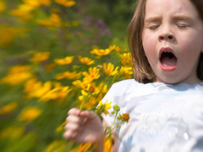 Young Girl Sneezing Among Yellow Flowers